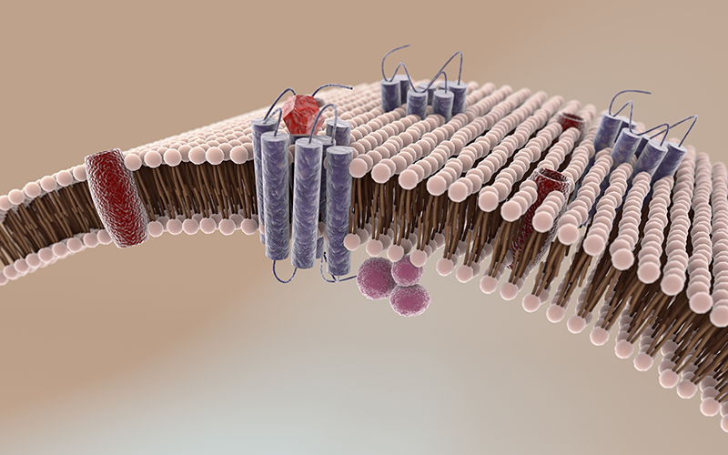 Success key for therapeutic discovery process on membrane proteins